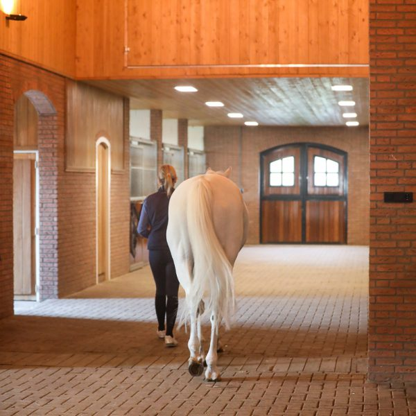 Inside the stable